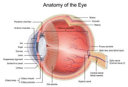 Anatomy of the Eye Diagram